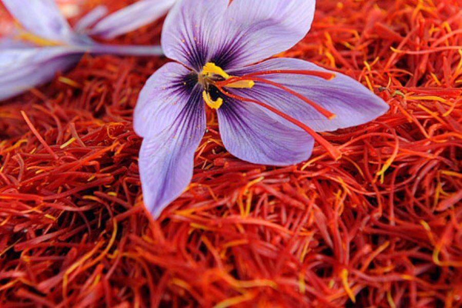 زعفران ریز پوشش دهی شده